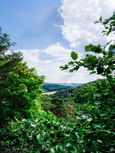 trees forest woodland landscape landscapes woods europe luxembourg sir lux lu syre mosel grevenmacher syr moselle vallée vallee musel manternach lellig syrdall sirdall