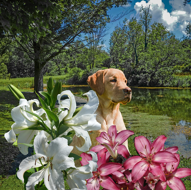 Park, flowers and dog.