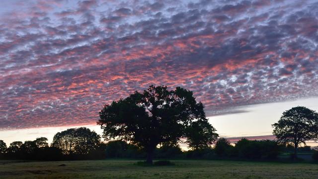Morgenhimmel über der Klink-Eiche (Quercus robur) (1)