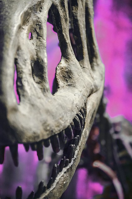 'Hi, my name is Rex. T-Rex.'