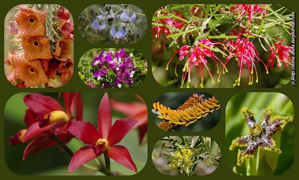 gan-botani-collage-a