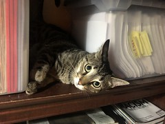 The Binx on the Shelf