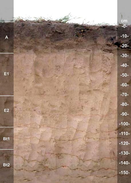 Faula soil series TX