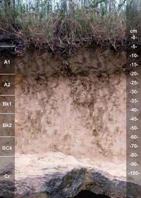 Carbengle soil series TX