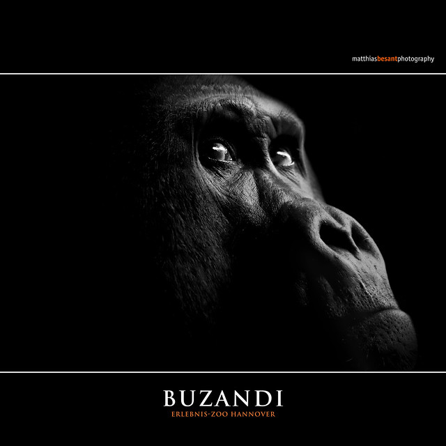 BUZANDI