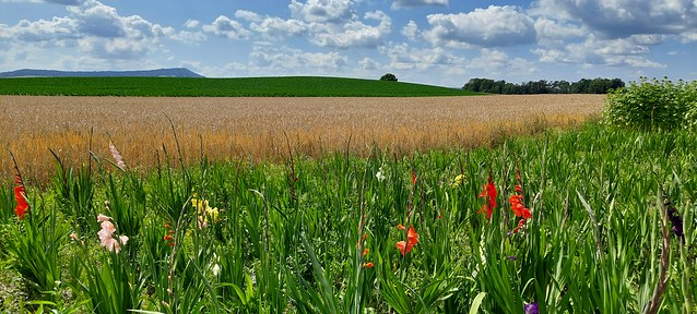 Samsung Galaxy A52 Landscape Image Sample