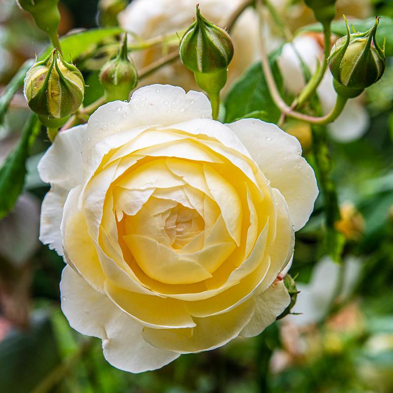 DSC_6387_CFH_Garden_66.jpg