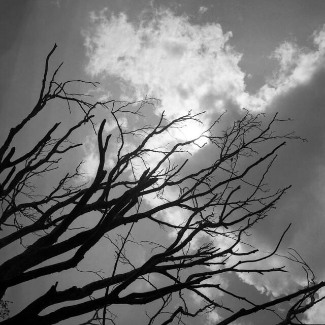 Backlight (Covid free) - Appennino Reggiano - June 2021
