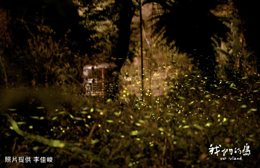 那瑪夏的星星菜園 螢火蟲復育 照亮返鄉青年回家路