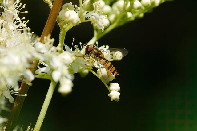 Insekt auf