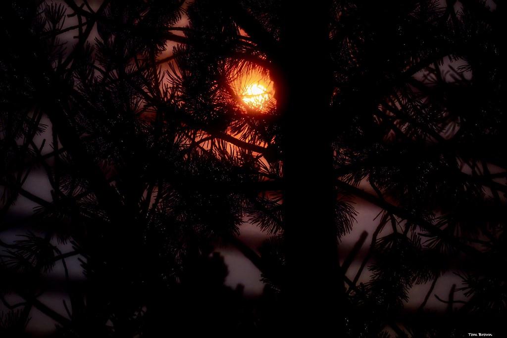 'Sunset/Trees/Smoke Filled Skies'