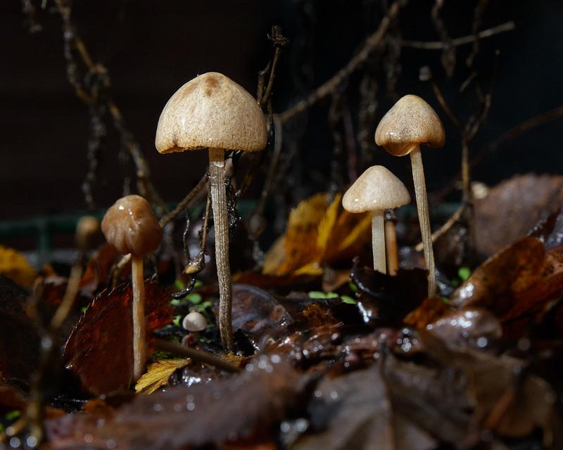 DSC_4731_Fungi_26-Edit.jpg