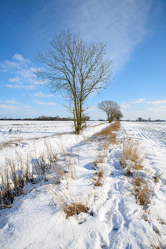 DSC_5325_CFH_snow_321.jpg