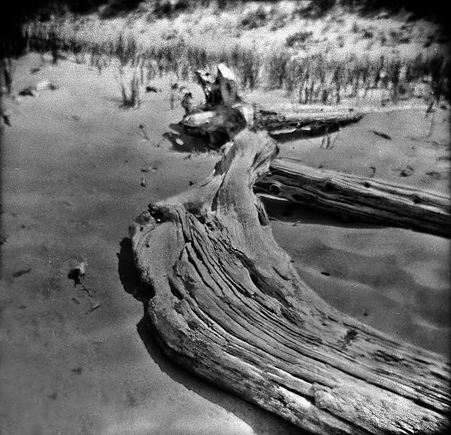 Driftwood, Lake Superior Shoreline, Ontonagon County, MI