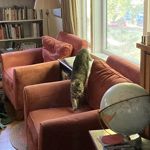 New (overstuffed) chairs, old cat