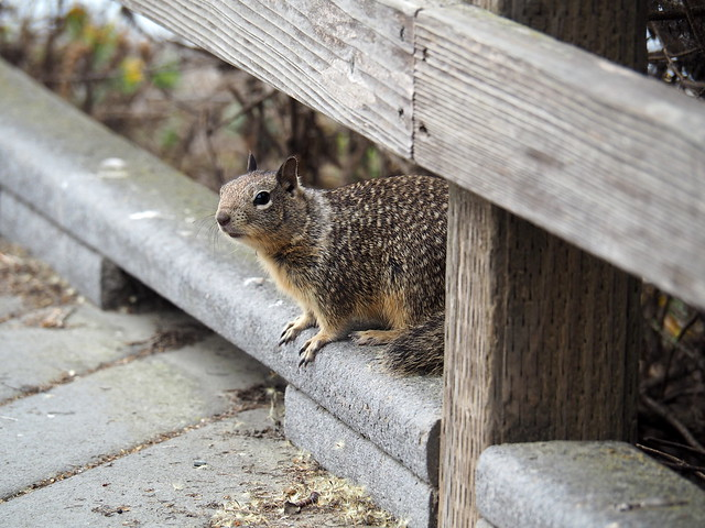 PA112525 scoiattolo
