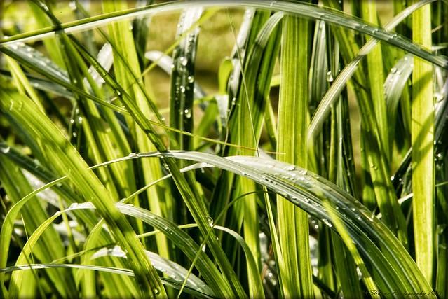 ... after the rain / nach dem Regen / 01011 ...