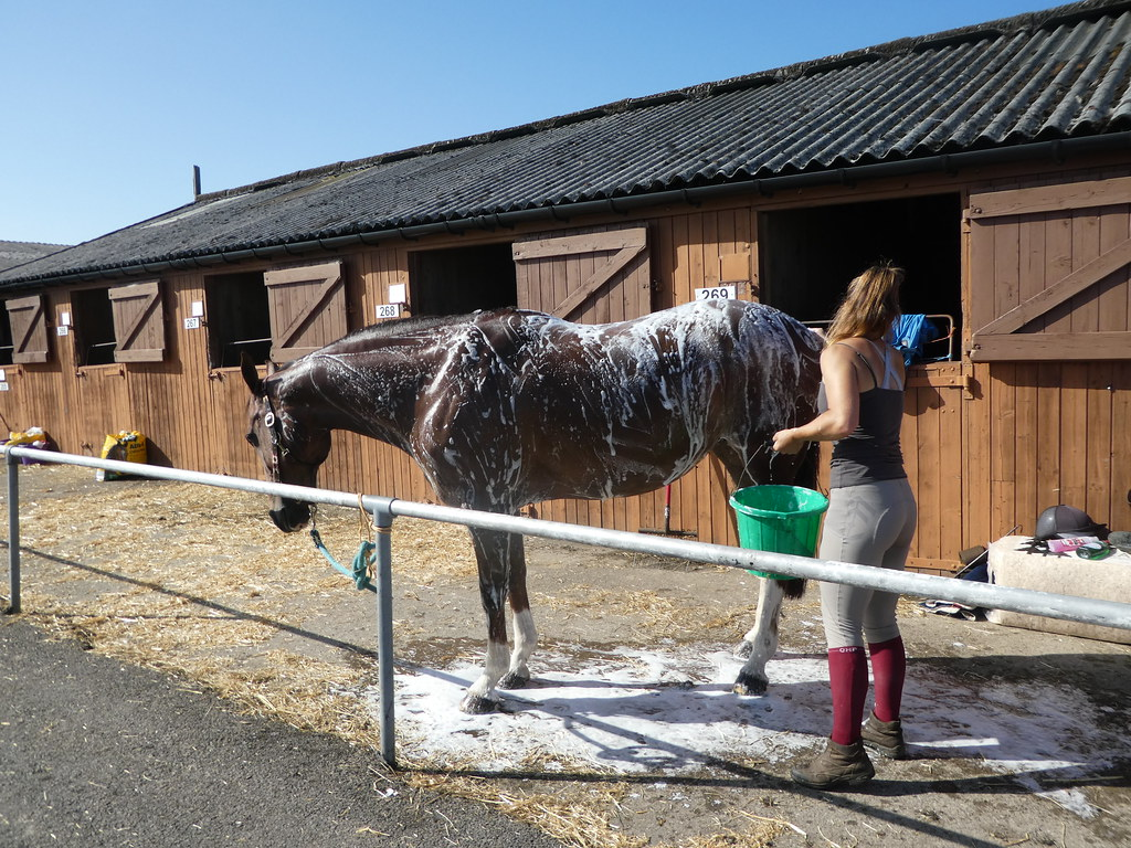 A horse being washed at the Great Yorkshire Show