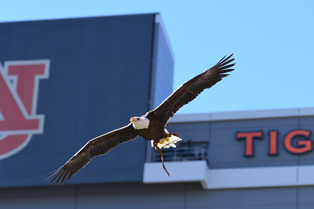 Spirit soars in Jordan-Hare Stadium.