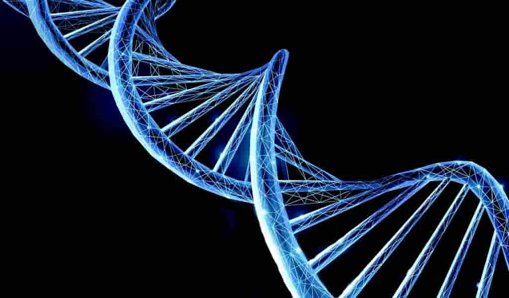 seuls1-5-à-7-%-du-génome-humain-moderne-nous-sont-propres