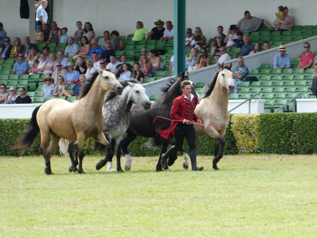 Atkinson Action Horses, Great Yorkshire Show