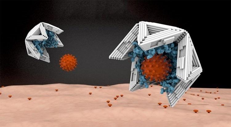 Bẫy kích thước nana vô hiệu hóa virut