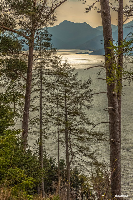 Morning sun gleams from the surface of Loch Hourn, a sea-loch/fjord looking through the pine forest of its northern shore, Inverness-shire, Scotland.