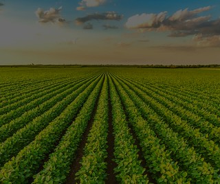 Foto Agricultura