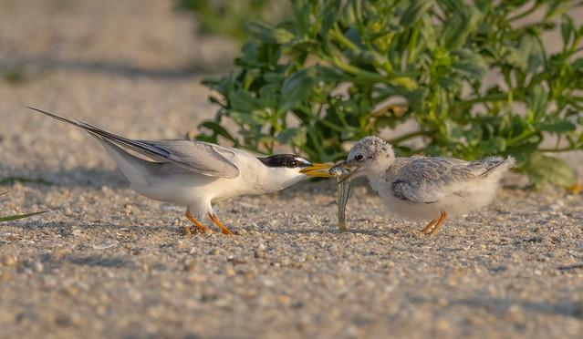 The Feeding Exchange!