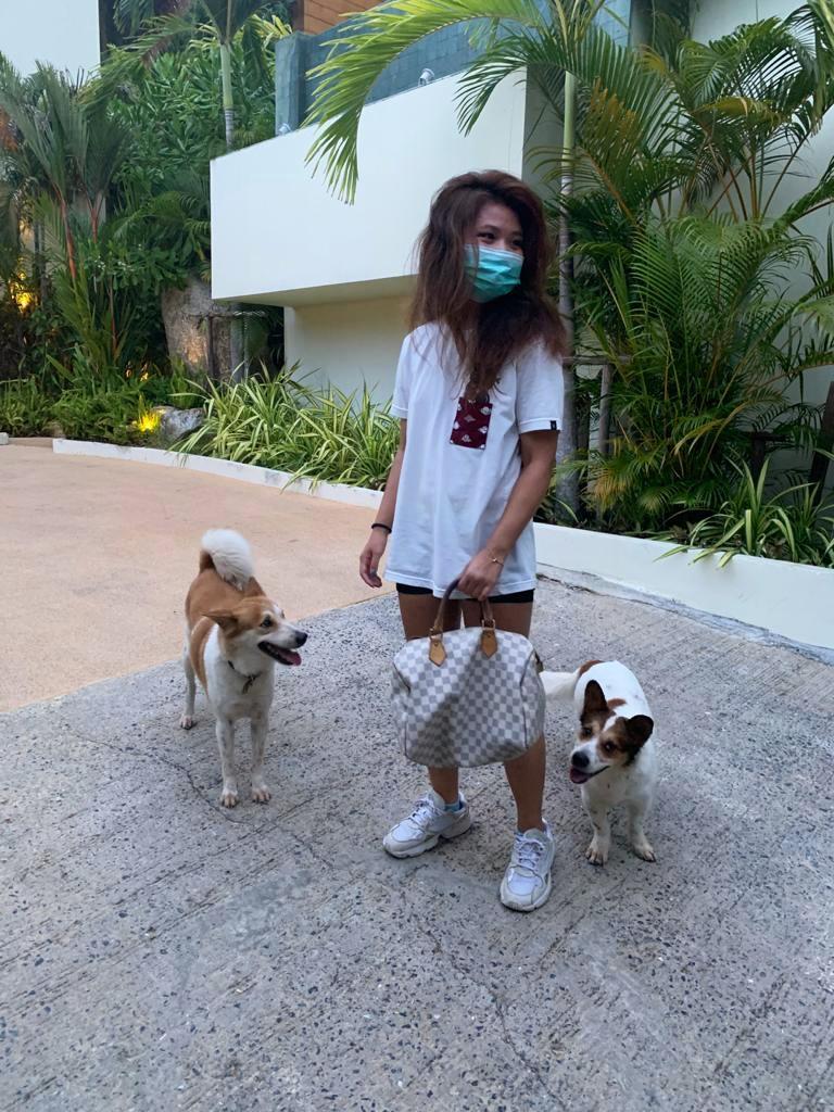 leftbanked Koh Samui dogs