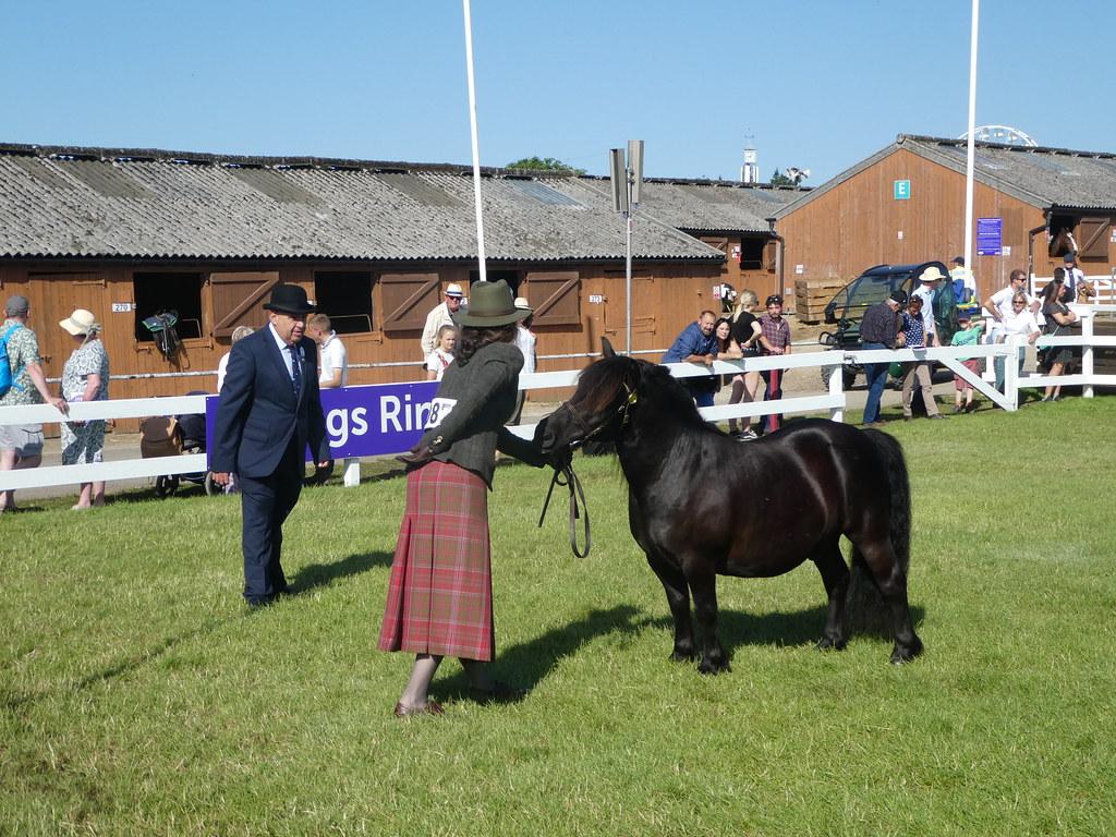 Shetland Pony judging, The Great Yorkshire Show