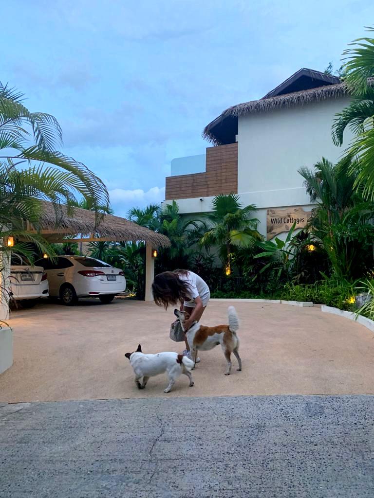 Wild Cottages Koh Samui dogs