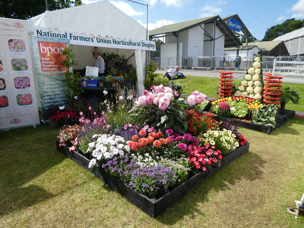 Plants and vegetables on display at the Great Yorkshire Show