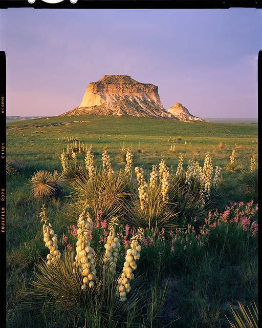 Pawnee Buttes Yucca