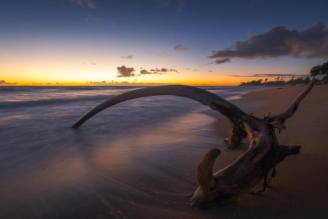 Sunrise beachwood