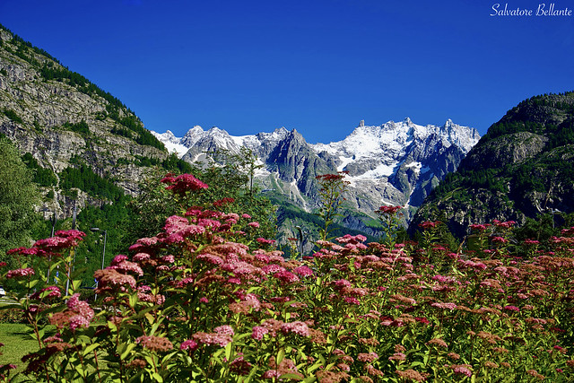 Monte Bianco 4810 M.Valle d'Aosta.