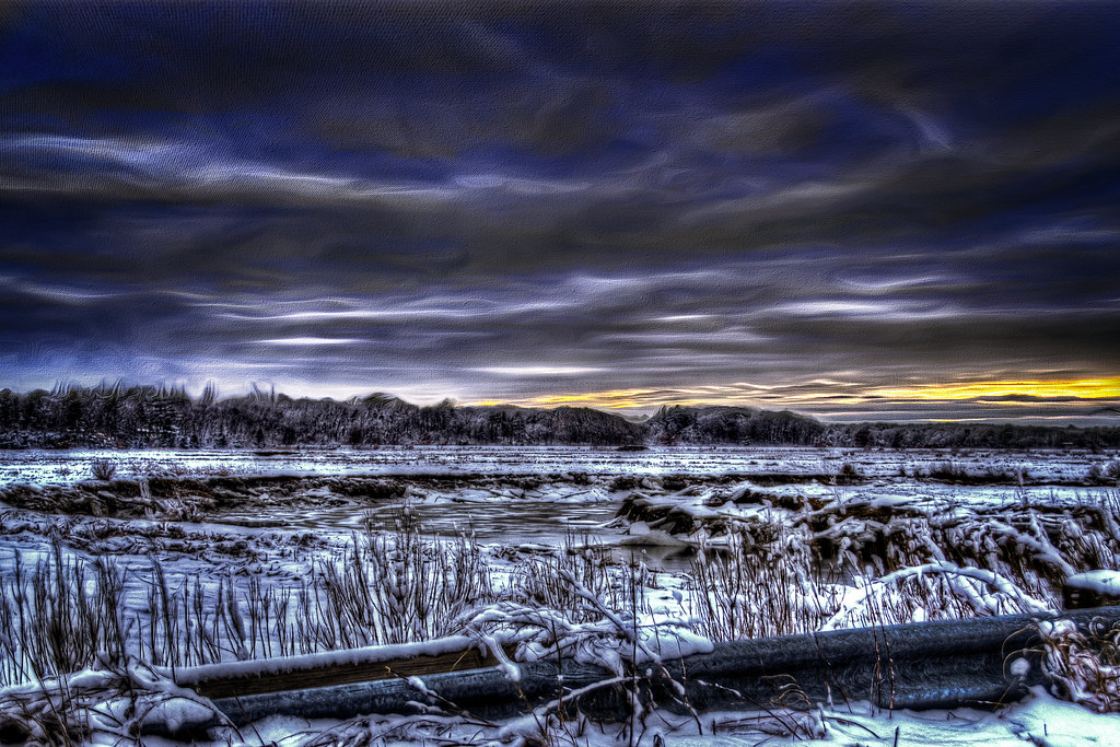 Cold Icy Marsh