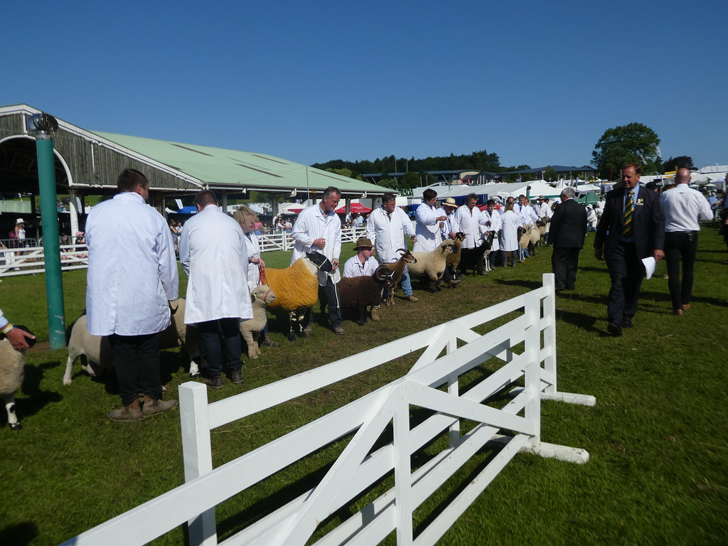 Sheep judging at the Great Yorkshire Show