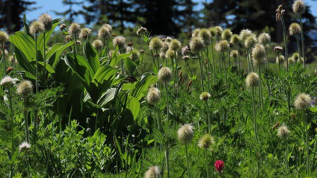 Wildflower Season Has Begun!