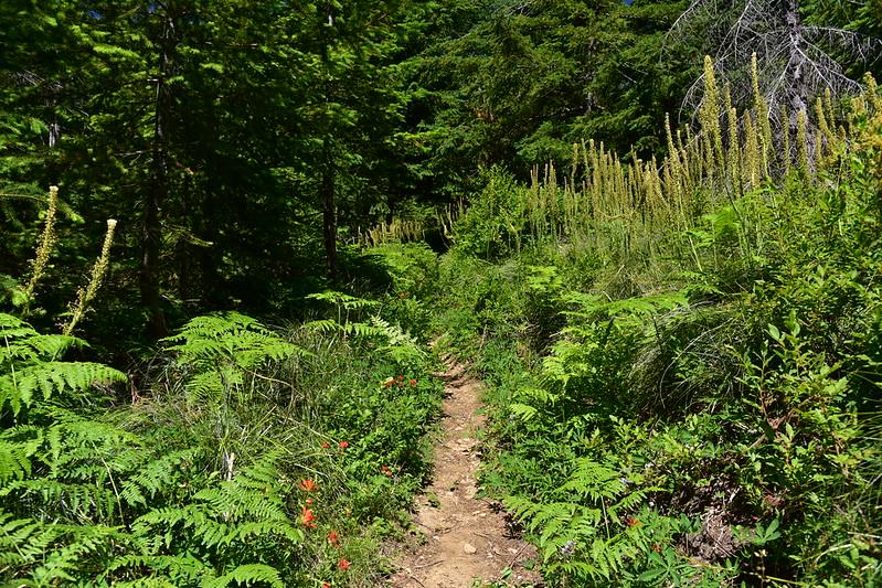 Mt. Mitchell hike