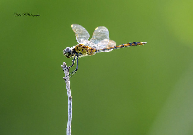 Dragonfly[Explore 7/20/21]