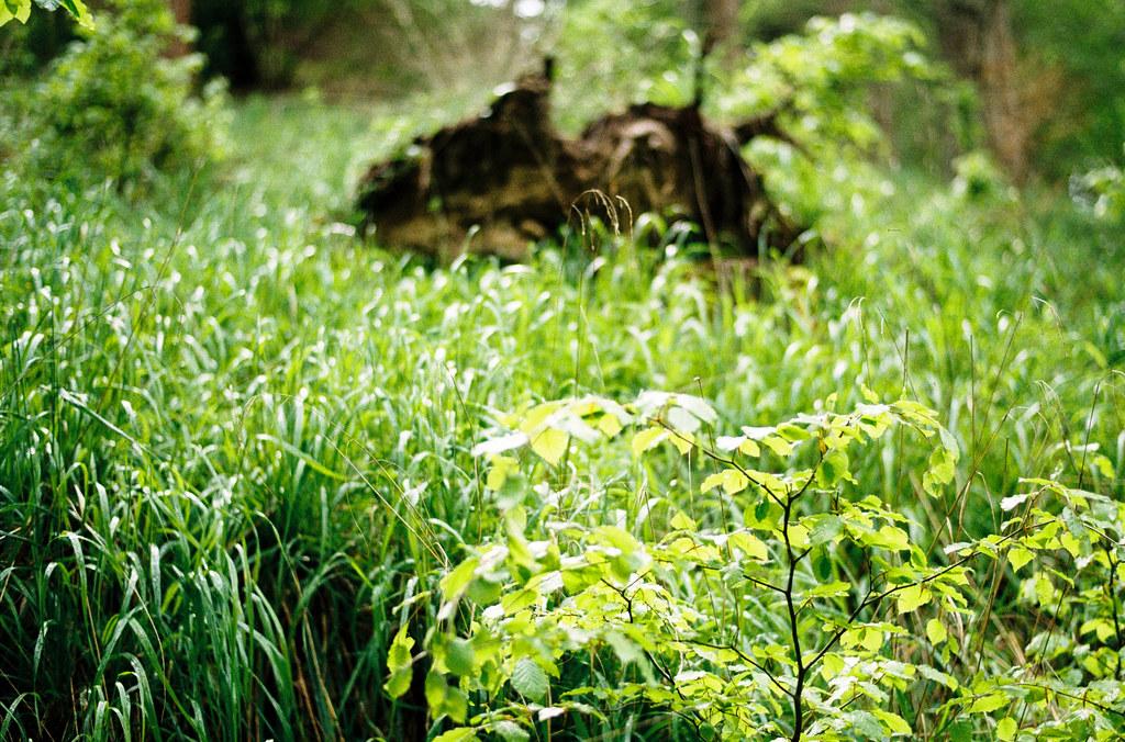 Lushest greens.