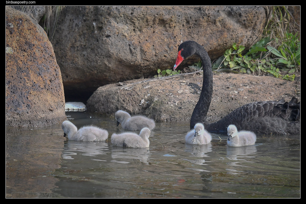 Black Swan: Spring Came Early