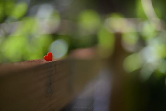 Crazy bokeh Fence...