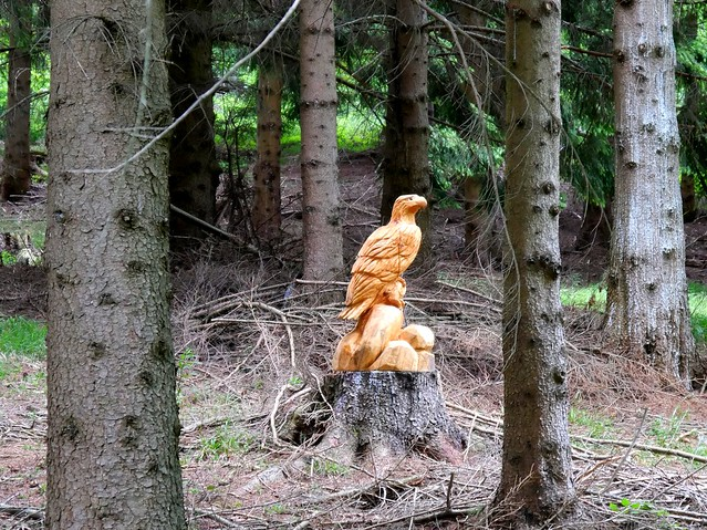 Überraschung im Wald / Surprise in the forest