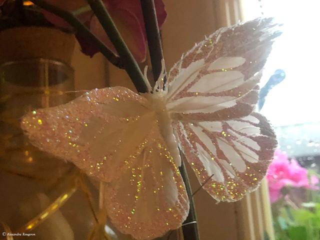 papillon-cuisine©