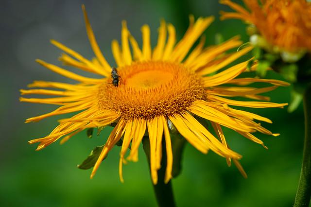 Little yellow blossom