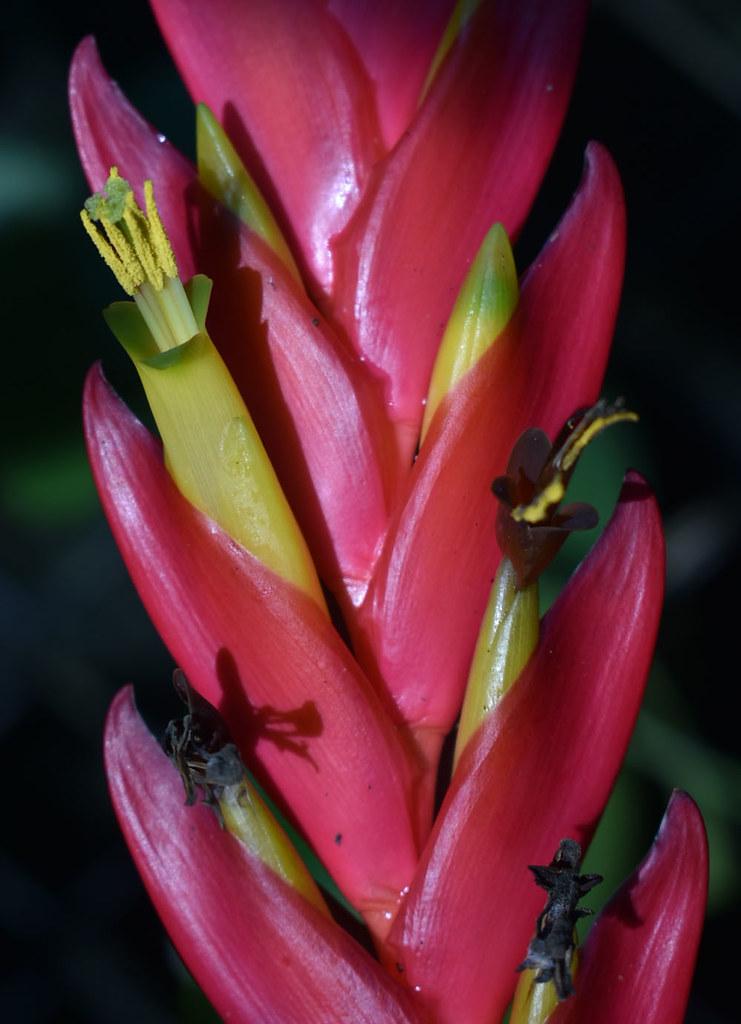 ?, Flecker Botanic Garden, Cairns, QLD, 02/07/21