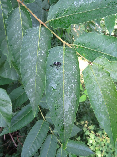 black exoskeleton lying on a green leaf surrounded by other leaves coverd with a shiny liquid