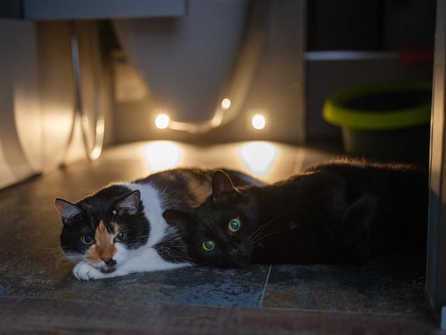 Mi-mi cats